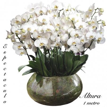Centro de orquídeas Mónaco