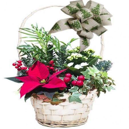 Cesta de planta Mini Navidad