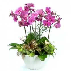 Centro de 3 orquídeas fucsia