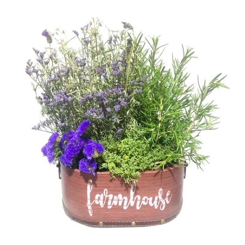 Cesta de plantas aromáticas