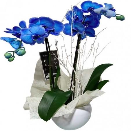 Orquídea azul infiltrada
