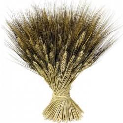 Trigo Negro Salvaje
