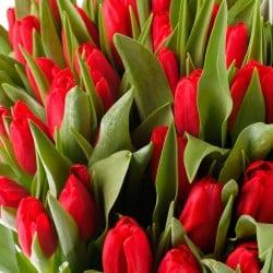 Enviar Tulipanes rojos a domicilio en Madrid
