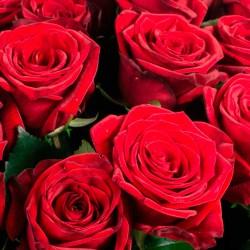 Comprar 50 rosas rojas en Madrid