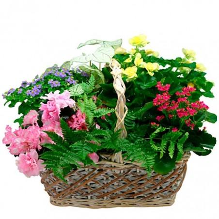 Cesta de plantas Ribera