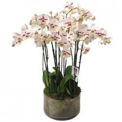 Centro de orquídeas Dalí
