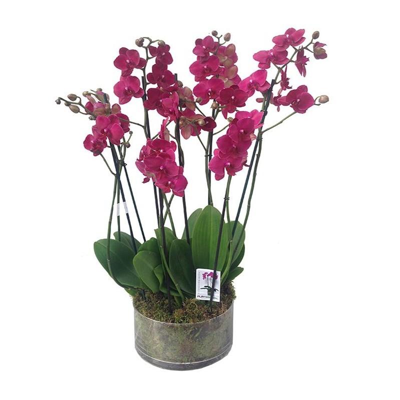 Centro de orquídeas Olympia