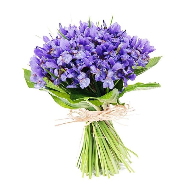 Ramo de Iris azul.