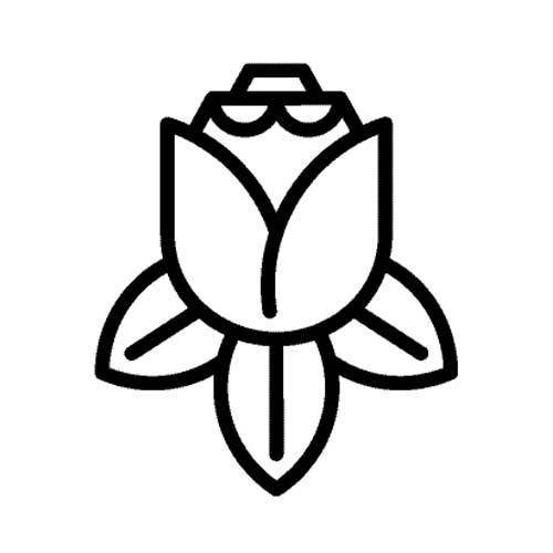 Ramos de tulipanes y siemprevivas