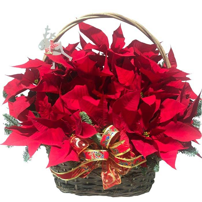 centros de flores para navidad