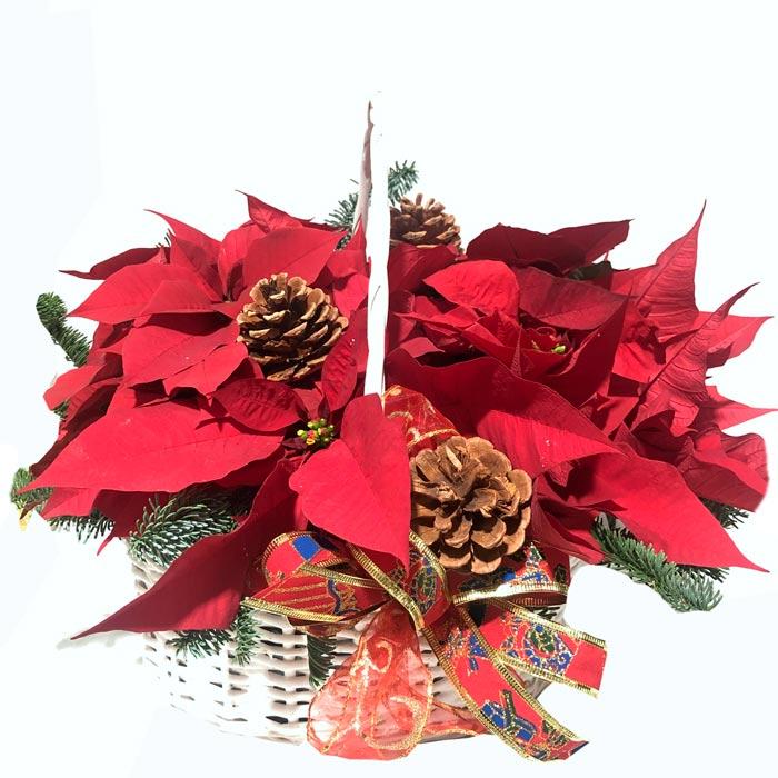 flores para regalar en navidad