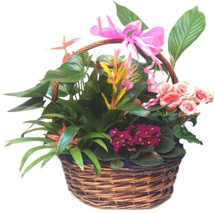 flores para regalar en verano