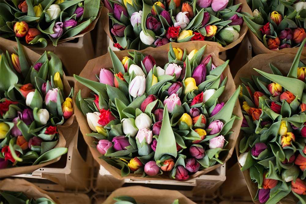 cuidado de los tulipanes