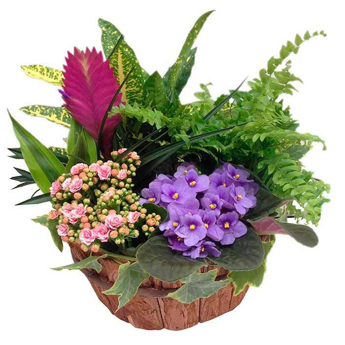 flores para nacimientos de bebes en madrid