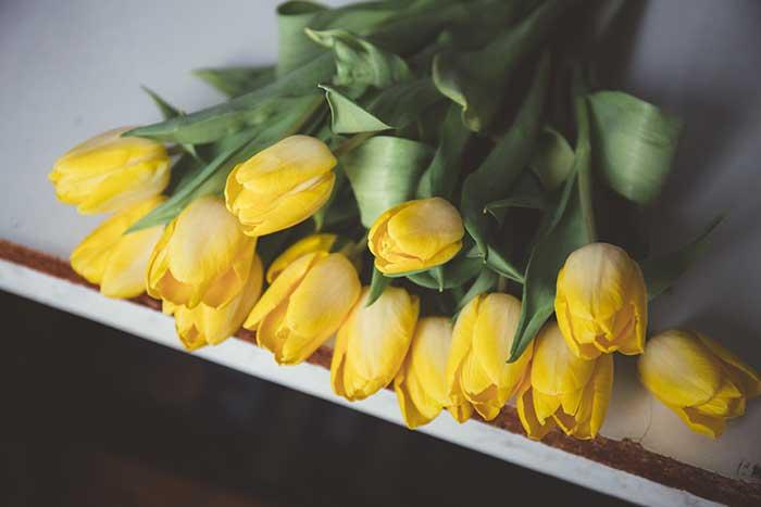 ramos de tulipanes amarillos