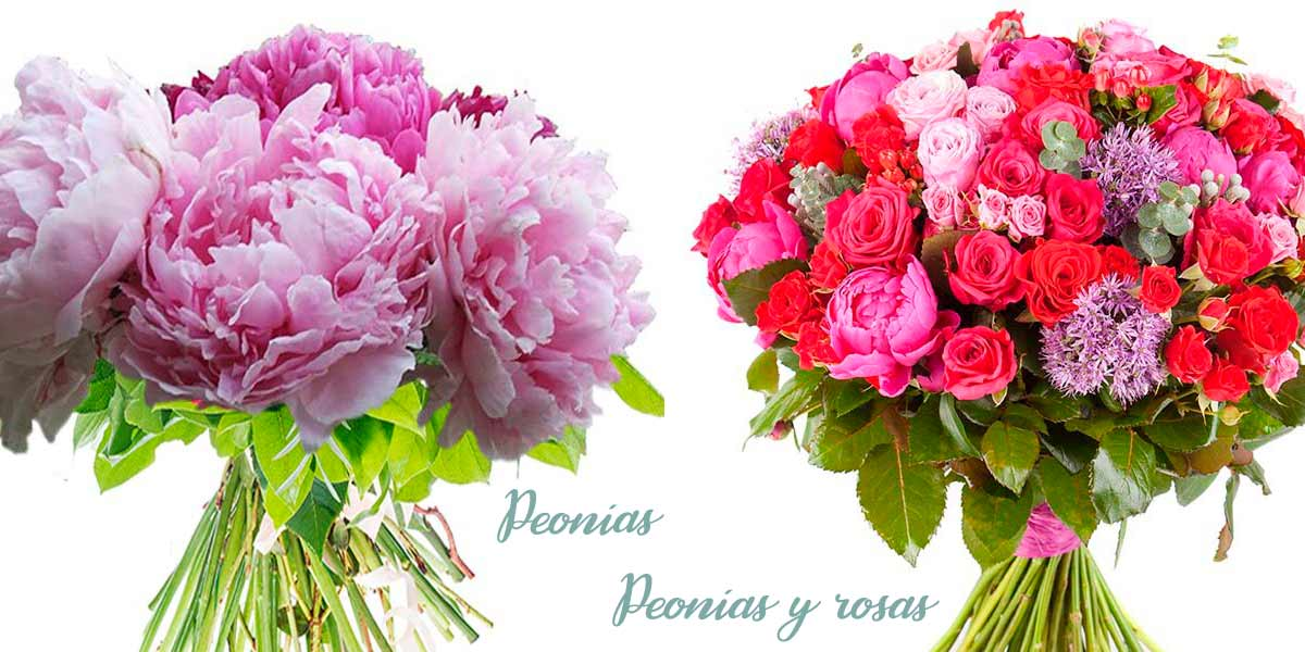 peonias madrid