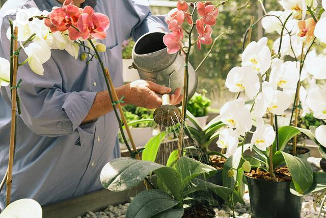 Image result for orquideas regar