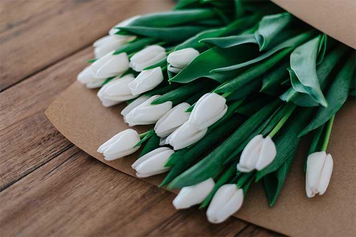 significado tulipanes blancos