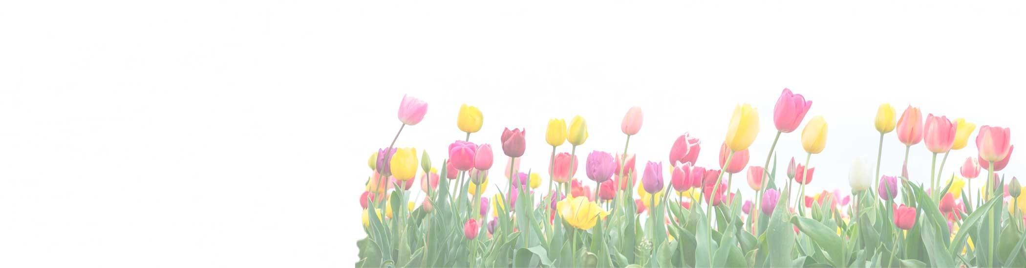 #Flores de temporada